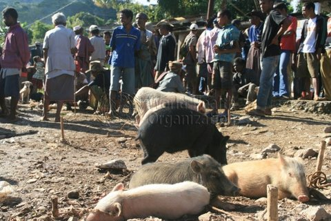 Pigs in the market, East Timor; Credit: WHO